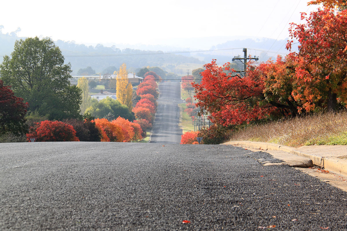 Road with autumn leaves on either side